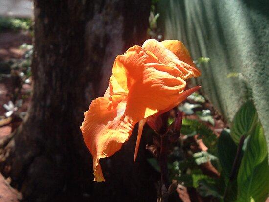 orange by sneha