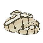 Ball Python : Lesser Bee : Snake Cake by Hannah Ward