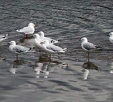 Seaguls - Tamar River by Ruth Durose