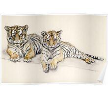 Tigercubs Poster