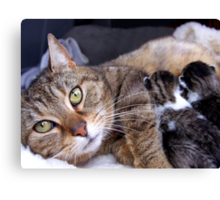 Dixey and her babies Canvas Print