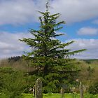 Churchyard Tree, Rattery by lezvee