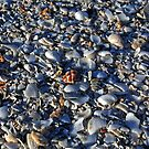 Shells, Eighty Mile Beach, Western Australia by Adrian Paul