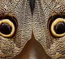 What does this look like to you??? Luda got it right!  Its a butterfly ..... Its a OWL butterfly by ZeeZeeshots