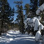 Snowy Cougar Crest Trail in the San Bernardino, mountains. by David Jones