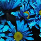 Blue Daisies by bloomingvine