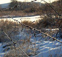 Fence Repair by Leanna Lomanski