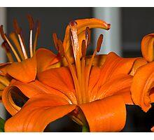 All Orange Photographic Print