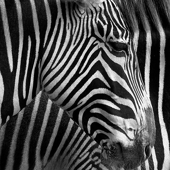 Black and white by Gili Orr