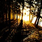 Sunset in desember by trbrg
