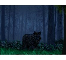 The Timber Wolf Photographic Print