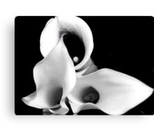 Cala Lilies in Black and White Canvas Print