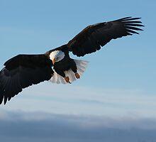 Check Out My Talon... by akaurora