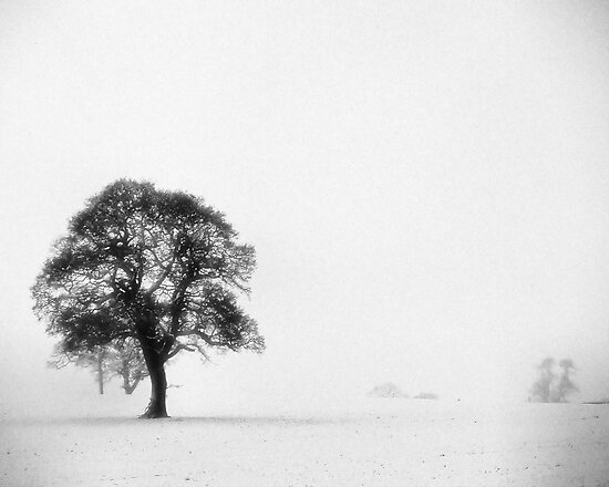 Snow storm tree by clickinhistory