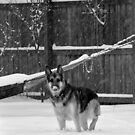 Fresh Snow Fall - So Exciting!! by Jarede Schmetterer