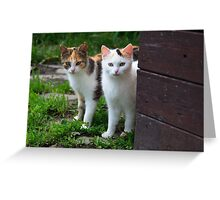 Calico Cuties Greeting Card