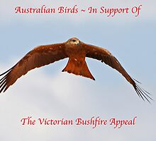 Phoenix Appeal - Birds of Robert Elliot by Phoenix-Appeal