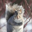 Eastern Gray Squirrel by Renee Dawson