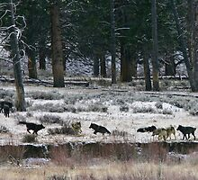 The Pack at Play by Ken McElroy
