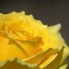 Mellow Yellow by Donna Adamski