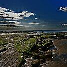 coastlines by paula cattermole