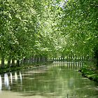 Canal curves by triciamary