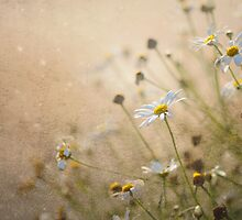 Daisy Dreams by Jacky Parker