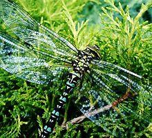 Dragonfly Green by mydirigibleplum