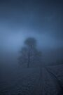 Tree in the mist by Matt Sillence