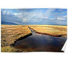Golden Desert Oasis Poster