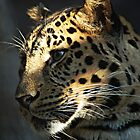 Sun Kissed Leopard by TerrieK
