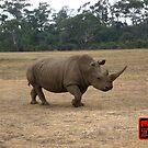 African Rhino Walking at Werribee Safari Park by Keith Richardson