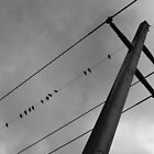 Birds on a Line by marz808
