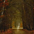 The Pathless Path II by LarsvandeGoor