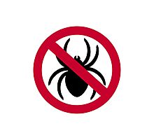 No spider Photographic Print