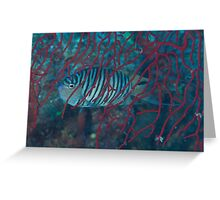 Genicanthid Greeting Card