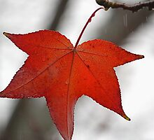 Leaf on a branch by gregorydean