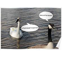 Trumpeter Swan And Canada Goose - Funny Poster