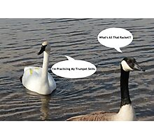 Trumpeter Swan And Canada Goose - Funny Photographic Print