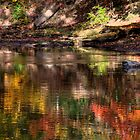 Everywhere I Look I See Color by Tony  Bazidlo
