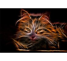Electric Glowing Cat Photographic Print
