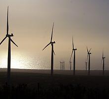 Wind farm La Canela. by Francisco Larrea