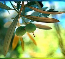Aegean & Mediterranean Pearl or Gold, Olives by Kuzeytac
