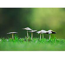 Mississippi Mushrooms Photographic Print
