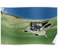 Green Turtle Baby Poster