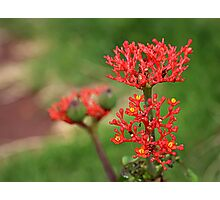Tropical Flower in Hawaii Photographic Print