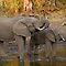 Elephants - Giraffe - Hippos
