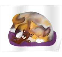Cat Nap with Teddy Bear Poster