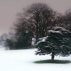 Nottingham Trees by Ian Reeley
