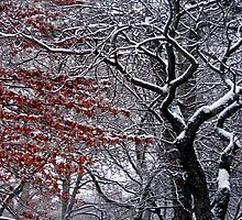 SNOW TOPPED TREES by KENDALL EUTEMEY